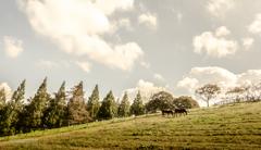 秋を感じに… 牧場へ♪