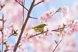 春色に囲まれて