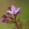 庭の春(ボロニアシドニー)