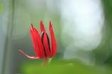 ブラジルのお花