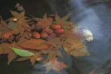 枯葉がベットのドングリ達