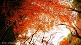 秋なんだなぁ~ <25>
