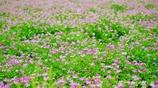 春の野草花 <4-4>