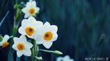 春の香りを届けます <7>