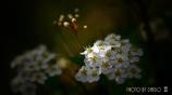 気立ての良い花  <4>