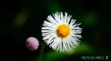 春の野草花 <9-2>