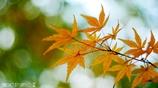 秋なんだなぁ~ <23>