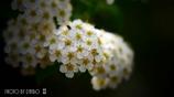 気立ての良い花  <1>