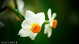 春の香りを届けます <8>