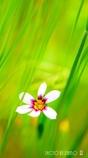 春の野草花 <5-2>