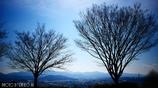 春待樹 <2>