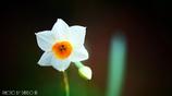 春の香りを届けます <9>