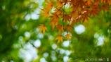 秋なんだなぁ~ <20>