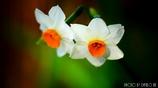 春の香りを届けます <10>