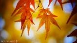 秋なんだなぁ~ <10>