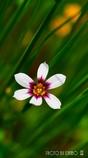 春の野草花 <5-3>