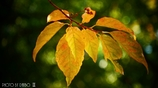 それぞれの秋 <26>