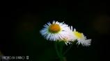 春の野草花 <9-3>
