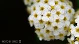 気立ての良い花  <3>