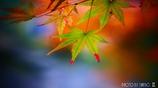 秋なんだなぁ~ <7>