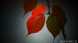 それぞれの秋 <22>