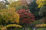 小石川後楽園・紅葉
