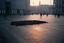Milanoの鳩、寒そう・・・