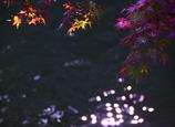 きらめき @岡崎東公園
