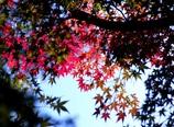 続Colorfully!   @岡崎東公園