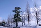 初雪で銀世界 #2 @デンパーク