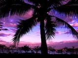 タイのヤシの木と海の朝焼け @シラチャ