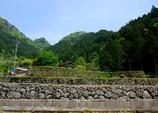 四谷 千枚田 NO.1000~997