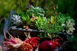 多肉植物の寄せ植え @デンパーク