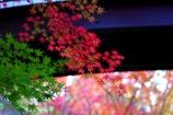 晩秋 #3 紅葉は、未だ見どころ @丈山苑
