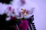 鳳凰(火の鳥風) @三都物語(京都編)