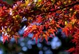 秋ですね @中山道