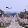 桜坂・こう撮りたかった・・・