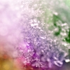 """☆**"""" Jewelry snow ☆**"""""""