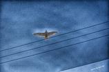 ◆イカロスの翼◆