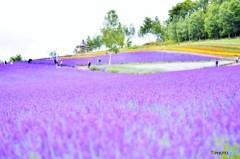 富良野の彩香の里にて