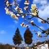 梅花咲く頃