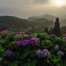 朝の高原2