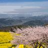 春の白木峰高原