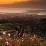 高原の朝景