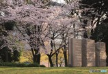 桜 ストーンズ