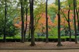 秋 名城公園