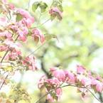 CANON Canon EOS Kiss X5で撮影した(限りなく透明にちかい )の写真(画像)