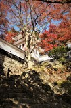 八幡城の秋 #3
