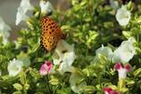 蝶々&お花