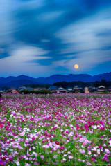 コスモス畑でお月見